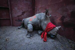 Фотографи виступили проти браконьєрства