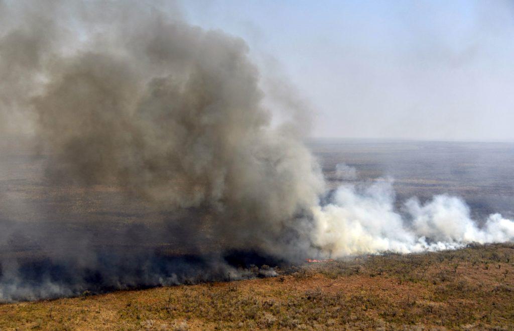 Пожежі в Амазонії знищили доісторичні твори болівійського наскельного мистецтва