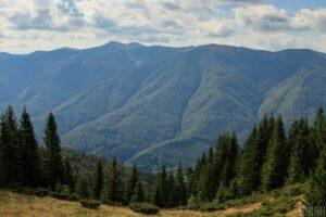 У Карпатах масово вирубають ліс