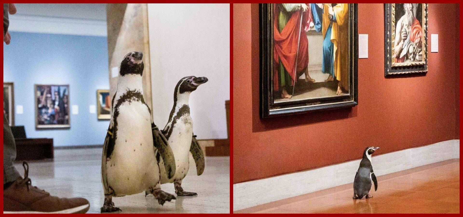 Музей в Канзас-Сіті відвідали пінгвіни