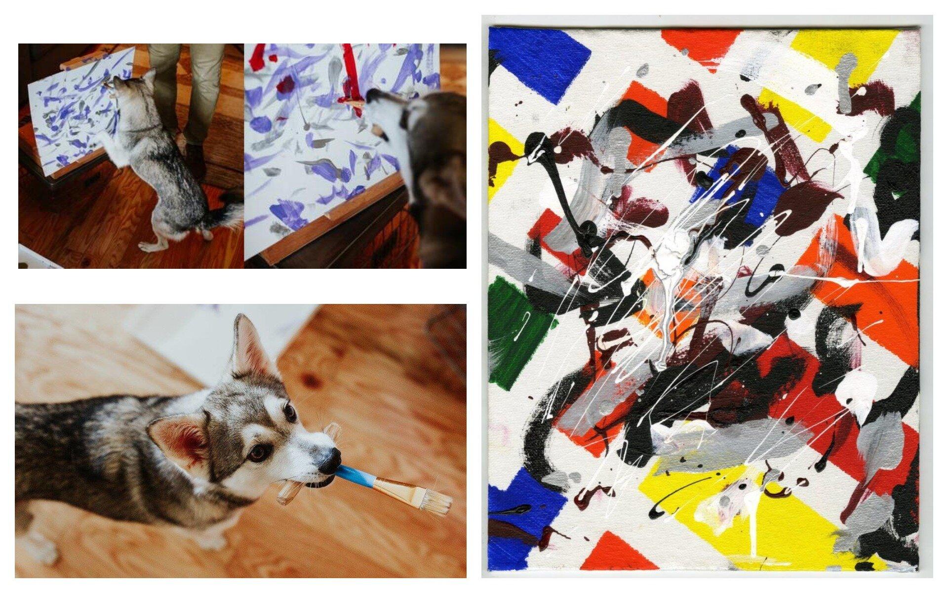 Американська галерея дарує марихуану за придбання картин собаки