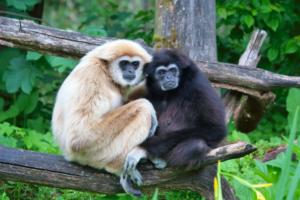 Вчені відкрили новий вид древніх приматів