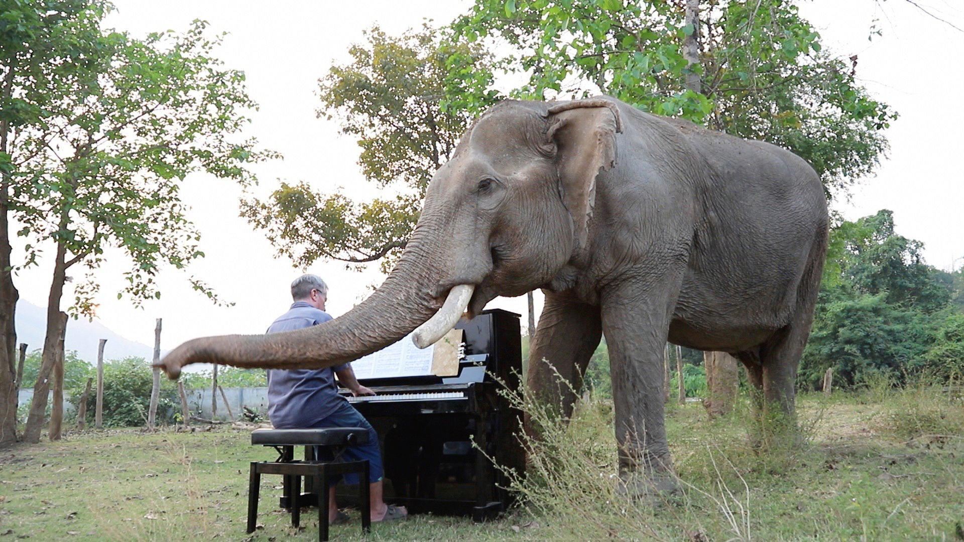У Таїланді слонам грають класичну музику