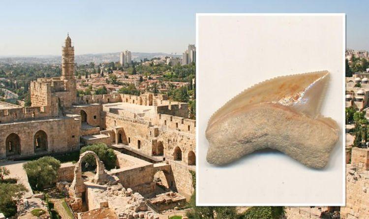 У Місті Давида під час розкопок знайшли зуби акул епохи динозаврів