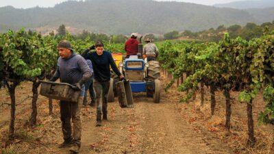 Олафур Еліассон створить павільйон для дегустації вин